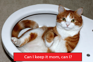 Cleaning Made Easy – Cat Litter Box (5 Terrific Ideas)